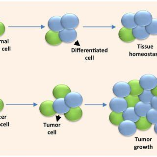 Research on cancer cells
